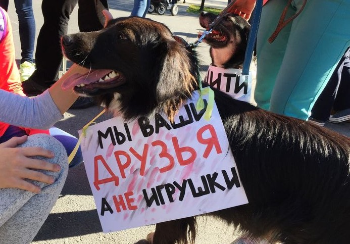 Тюменцы собирают беспризорным животным «Мешок добра»